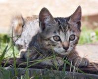 Free Kitten Stock Images - 20406164
