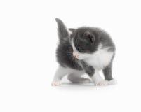 Free Kitten Stock Photography - 21556742
