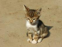 Kitten. Cat in the sun Stock Image