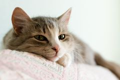 Kitten. The kitten on a sofa Royalty Free Stock Photos
