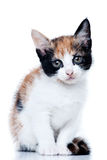 Kitten. Standing on white background Royalty Free Stock Photography