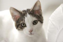 Kitten. Little kitten, against white background stock photos