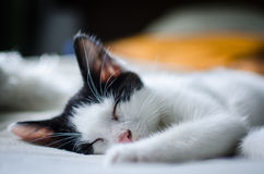 Kitten. A kitten taking a nap during a summer day Stock Images