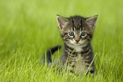 Free Kitten Stock Images - 2606024