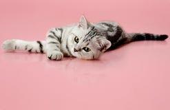 Kitten. The grey  stripy beautiful little  kitten, lie on pink  background Royalty Free Stock Photo