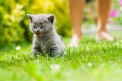 Kitten. Young cute kitten siting on fresh green grass in the garden Stock Images