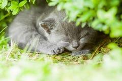 Kitten. Young grey kitten lying in the garden on fresh green grass Stock Photography