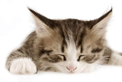 Kitten. On a white background Stock Photos