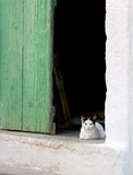 Kitten. A kitten with amazing eyes resting in the doorway of an old Greek village house royalty free stock photography