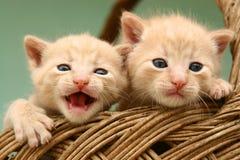 Free Kitten Royalty Free Stock Image - 375746