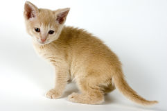 Kitten. The kitten has left to take a walk Royalty Free Stock Images