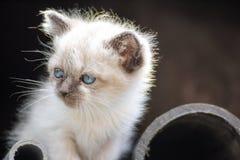 Kitten. A kitten Stock Photos