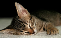 Kitten. Sleeping kitten on a soft blanket Royalty Free Stock Images
