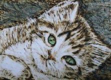 Kitten. Beautiful green eyed, tigress kitten Royalty Free Stock Image