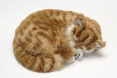 Kitten. Sleeping at a desk Stock Photography