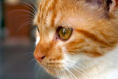 Kitten. Close-up of cat with amazing detail Royalty Free Stock Photos