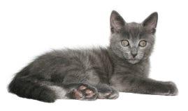 Kitten. Small kitten on a white background Stock Photography