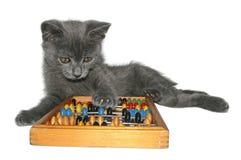 Kitten. Playing kitten on a white background Stock Photo