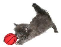 Kitten. Small kitten on a white background Royalty Free Stock Image