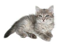 Kitten. Small kitten on a white background Royalty Free Stock Photos