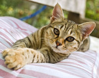 Kitten. Lying down on a cushion in the garden Royalty Free Stock Photos