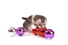 The kitten Stock Images