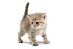 The kitten Stock Photo