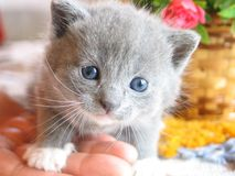 Kitten. Closeup Stock Photos