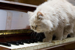 The kitten. Goes on keys of the old piano Royalty Free Stock Photos