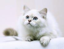 Kitten. Stock Images