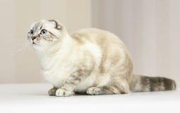Kitten. Stock Photo