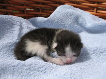 Kitten. The small kitten in the basket Stock Photography