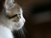 Kitten. Portrait Royalty Free Stock Photo