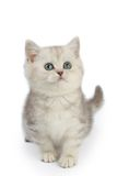 Kitten Royalty Free Stock Photos