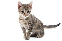 Kitten. Grey striped kitten on a white background Stock Photo