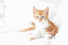 Kitten abstract. Hypnotic ginger kitten on a bleached out white background Stock Photo