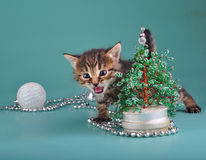 Kitten against Christmas tree Royalty Free Stock Photography