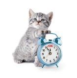 Kitten with alarm clock displaying 2016 year Stock Image