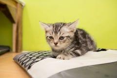 Kitten alone B&W. Sick kitten sleeping alone in cat cafe Royalty Free Stock Photography