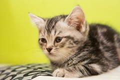 Kitten alone. Sick kitten sleeping alone in cat cafe Stock Photography