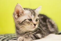 Kitten alone. Sick kitten sleeping alone in cat cafe Royalty Free Stock Image