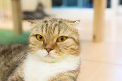 Kitten alone. Sick kitten sleeping alone in cat cafe Royalty Free Stock Photos