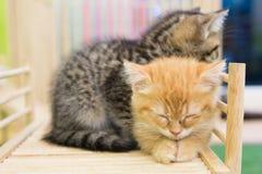 Kitten alone. Sick kitten sleeping alone in cat cafe Stock Images