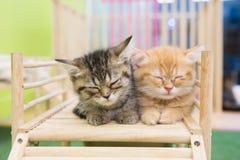 Kitten alone. Sick kitten sleeping alone in cat cafe Royalty Free Stock Images