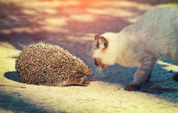 Kitten And A Hedgehog Stock Images