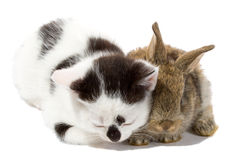 Free Kitten And Banny Stock Image - 6625571