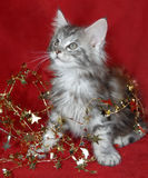 Kitten And Christmas Decorations Royalty Free Stock Photos