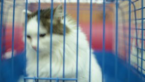 Kitten in an animal shelter cage stock video