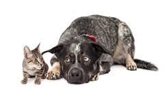 Kitten Annoying Patient Dog royalty-vrije stock foto