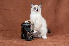 Kitten with antique camera on suede. Ragdoll kitten posing with antique camera on brown suede background Stock Images